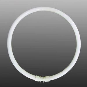 Kruhové zářivky